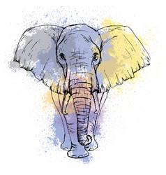 Sketch by pen african elephant front view vector