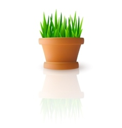 Fresh green grass in flowerpot vector image