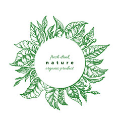 green foliage botanical design tea buch vector image
