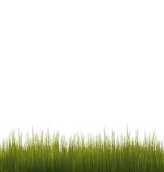 Green grass isolated on white background vector