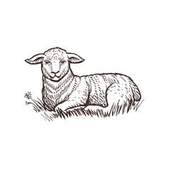 Lamb farm animal sketch isolated lamb mammal on vector