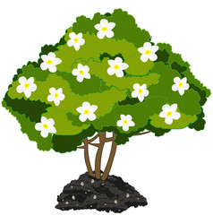 year green bush with white flower vector image