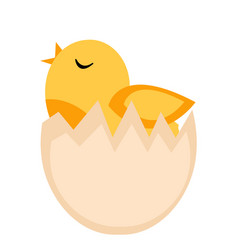 nestling hatched from egg yellow chicken icon vector image vector image