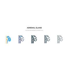 Adrenal gland icon in different style two vector