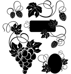 Grapevine and branches hops vector
