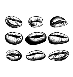 Hand drawn coffee beans set vector