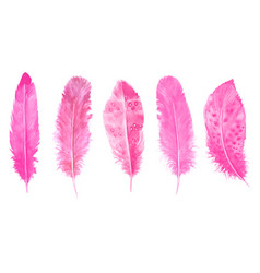 Hand drawn watercolour bird pink feathers set vector