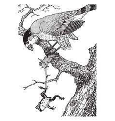 Hawk vintage vector
