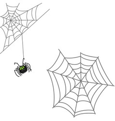 spider and web halloween icon isolated on white vector image