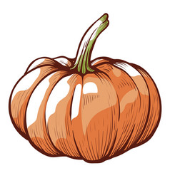 pumpkin sketch halloween decoration element vector image