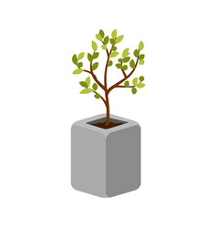Tree outdoor plant in a concrete pot vector
