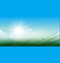 wild meddow summer background vector image