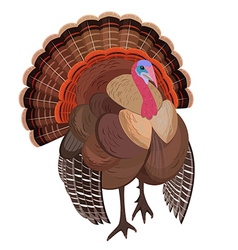 wild turkey for your design vector image vector image
