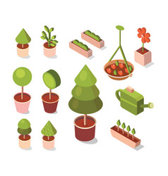 isometric flowers in pot vector image
