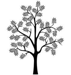 black tree silhouette isolated vector image