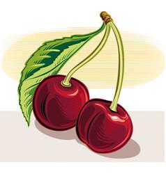 Cherries on white background vector