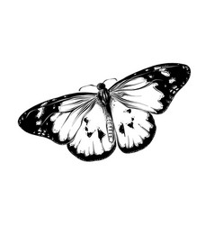 Hand drawn sketch of butterfly in black color vector