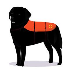 Labrador retriever lifesaver outline vector