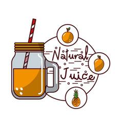 orange pineapple mango fruit and glass jar natural vector image