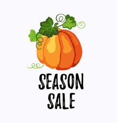 Season sale sticker with ripe pumpkin on the white vector