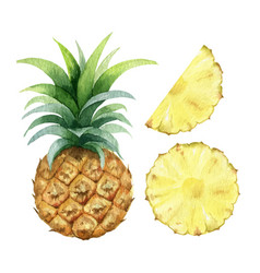 watercolor hand painted jucy pineapple vector image