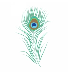 Peacock feather isolated vector image vector image