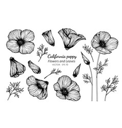 collection set california poppy flower vector image
