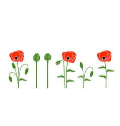 Poppy flower vector