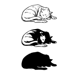 Sketch cat sleeping curled up vector