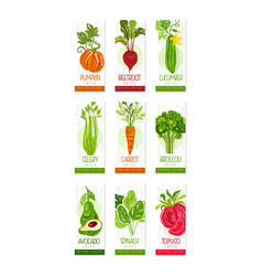 Vertical cards or banners set of fresh vegetables vector