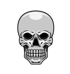 Danger human or monster skull vector image