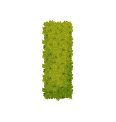 Bush in shape a rectangle view from above vector