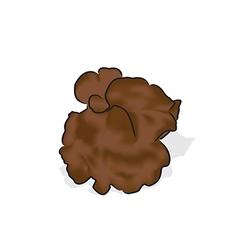 Jews ear mushroom vector