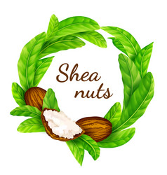 shea nuts with leaves in vector image