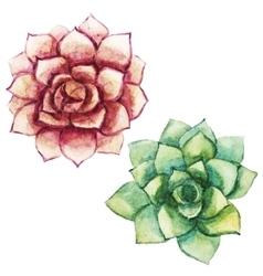 Nice watercolor succulents vector image