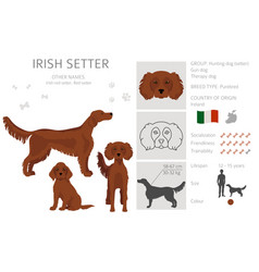 Irish setter clipart different poses coat colors vector