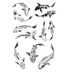 set of koi carps japanese fish korean animals vector image