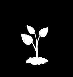 sprouting plant in the soil isolated on black vector image