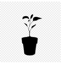 black silhouette of sprouting plant in the pot vector image