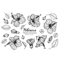 Collection set of hibiscus flower and leaves vector