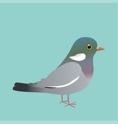 Common wood pigeon vector