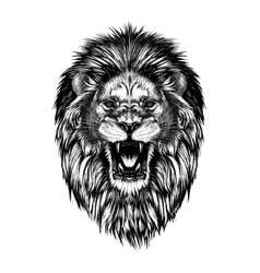Hand drawn sketch of lion head in black isolated vector