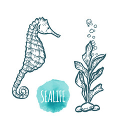 Sea horse drawing on white background hand drawn vector