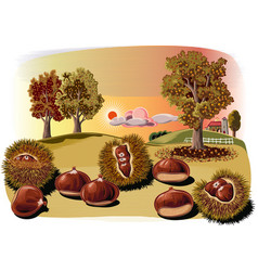 Some urchins of chestnuts in a chestnut vector