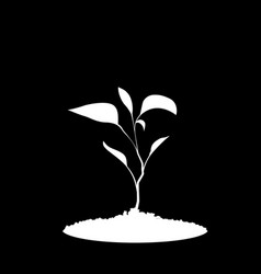white silhouette of sprouting plant in the soil vector image