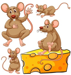 Brown mouse and cheese slice vector