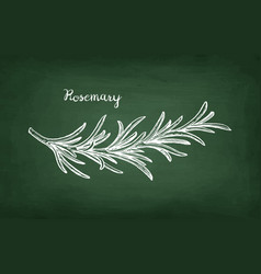 chalk sketch of rosemary branch vector image