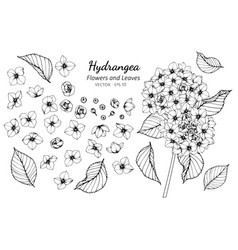 Collection set of hydrangea flower and leaves vector