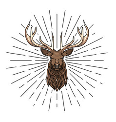 head deer linear coloured hand drawn vector image