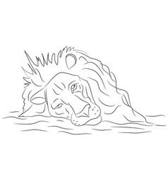 lion portrait lines vector image